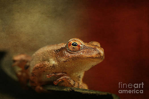 Northern Spring Peeper by Cindi Ressler