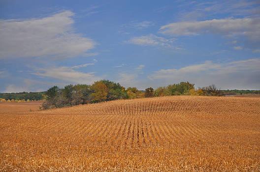Northwest Iowa Golden Corn Field by Wendy Ashland