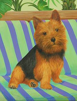 Norwich Terrier by Bonnie Golden