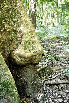 Nose Tree in Gwandanaland by Debbie Cundy