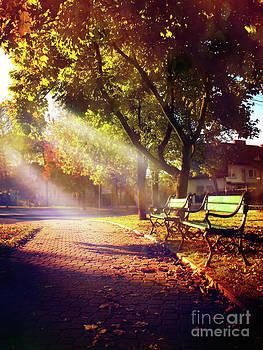 Nostalgia of autumn  by Monika Pachecka