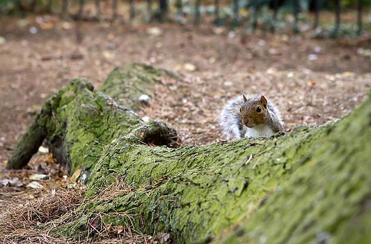 Fizzy Image - nosy squirrel