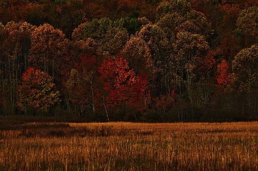 November Burn by Robert Geary
