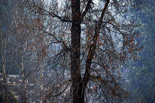 November Cottonwood in Snowfall by J Foster Fanning