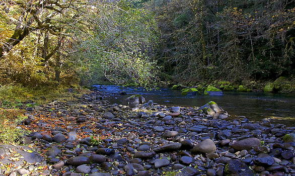 November Creek  by Tim Rice