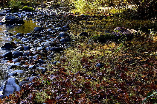 November Creekside  by Tim Rice