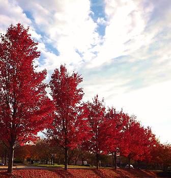 November Leaf Colors in North Carolina by Kathy Budd
