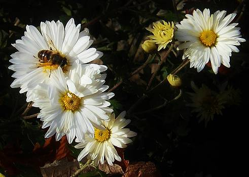 November Pollen by Alison Richardson-Douglas