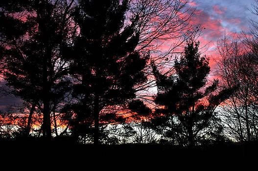 November Sky by Studio Maeva