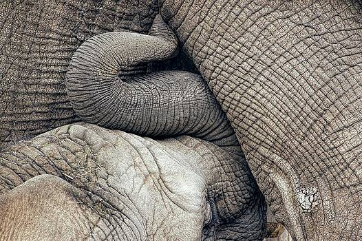 Nursing Baby Elephant Breastfed By Mother by Tracie Kaska