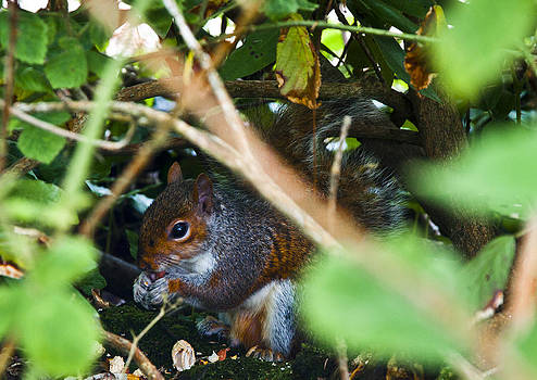 Nuts by Paul Howarth