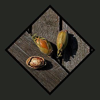 Nutscape by Martin Billings