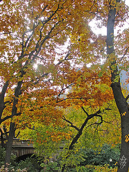 NY Central Park in the Fall by Brooke Fuller
