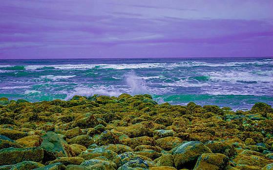 Steven Brodhecker - Nye Beach