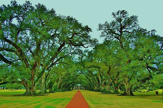 Oak Alley Plantation by John P Houlihan