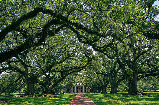 Oak Alley Plantation by Peter Verdnik