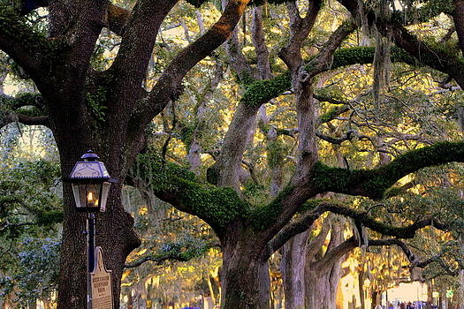 Oak and Streetlamp by Pete Dionne