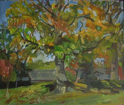 Oak by Devin Hunter