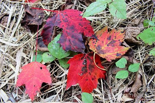 Oak Fantasy by Laura Paine