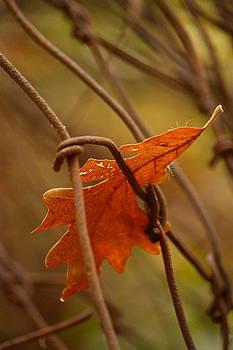 Oak Fencing by Kim Kruger