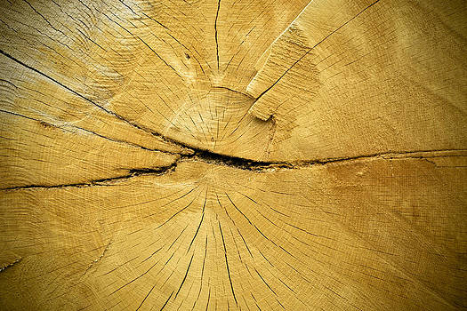 Oak by Frank Tschakert