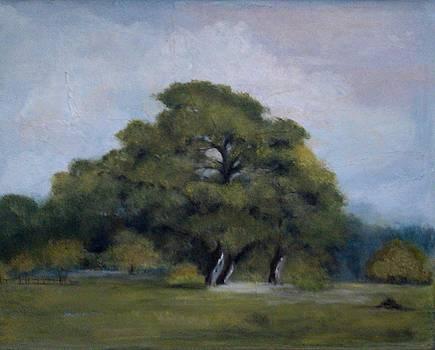 OAK in the meadow by Marcia Crispino