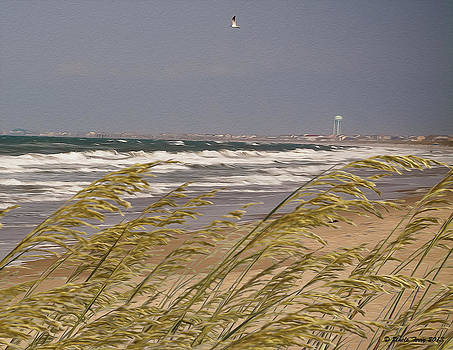 Oak Island by Terry Jacumin