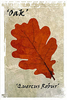 David Pringle - Oak Leaf