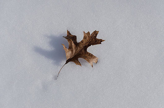 Oak Leaf by Diana Boyd