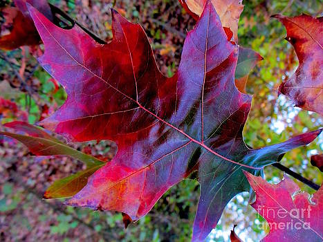 Oak Leaf by Maria Scarfone