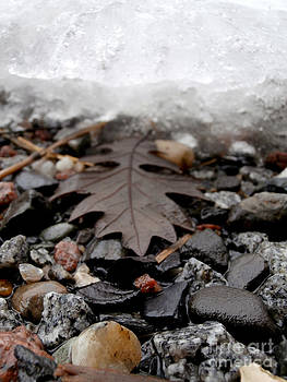 Oak leaf on a winter's day by Steven Valkenberg