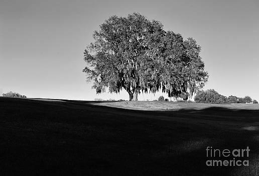 Wayne Nielsen - Oak Majestic Tree Live in Sunlight