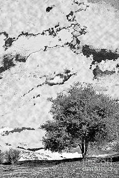 Oak on a Hill Blk and Wht by Gary Brandes