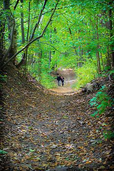 Oak Ridges Trail by Jeffrey Cohen