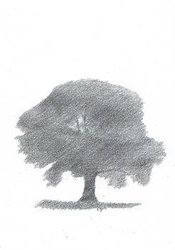 Oak Tree Drawing Number Four by Alan Daysh