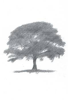 Oak Tree Drawing Number Two by Alan Daysh