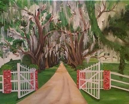 Oak Tree Drive by Hogan Willis