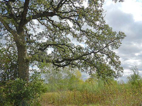Oak Tree in the Field by Mamie Thornbrue