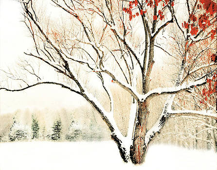 Oak Tree in Winter by Dorothy Walker