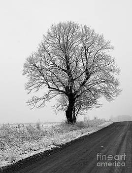 Oak tree in Winter by Kathy DesJardins