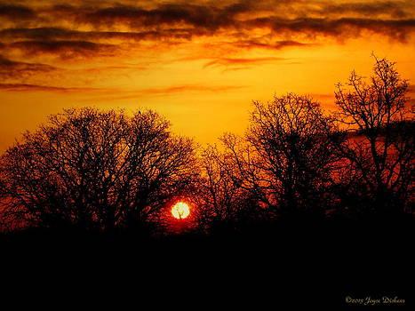 Joyce Dickens - Oak Tree sunrise