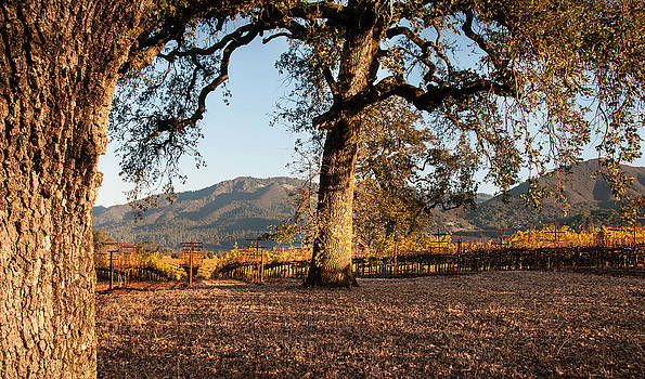 Oak Trees in the Vineyard by Kent Sorensen