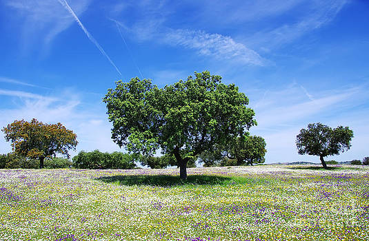 Oak trees on spring at Portugal by Inacio Pires