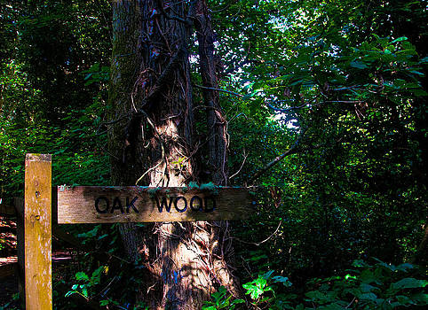 Oak Wood by Paul Howarth