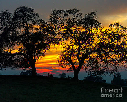 Terry Garvin - Oaks and Sunset