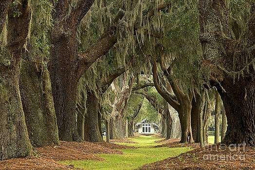 Adam Jewell - Oaks Of The Golden Isles