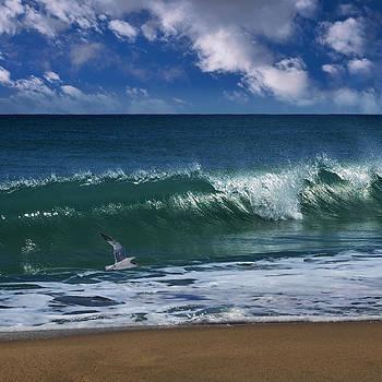 Ocean Blue Morning by Laura Fasulo