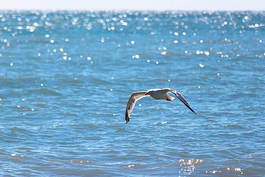Gaurav Singh - Ocean Flight
