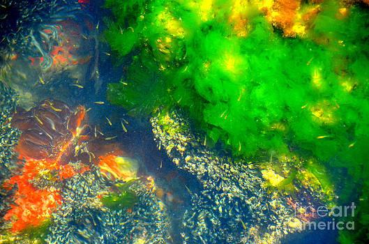Linda Rae Cuthbertson - Ocean Floor Baby Fish Small Fry