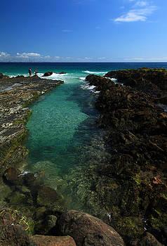 Ocean Rockpool by Noel Elliot